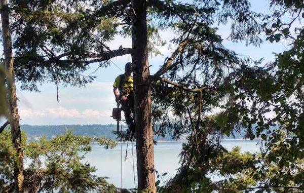 Timberland Tree Care Services